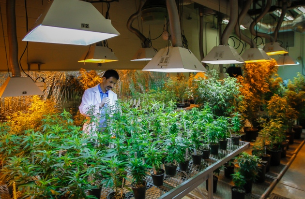 First-Ever Cannabis Research Lab in Washington Goes Live