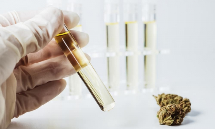 Sequoia Analytical Labs loses license after falsifying results