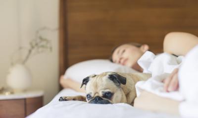 CBD Pets Stress