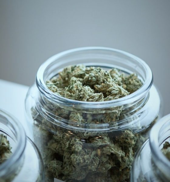 Kamala Harris Jokes About CBD to Make a Serious Point on Cannabis Reform